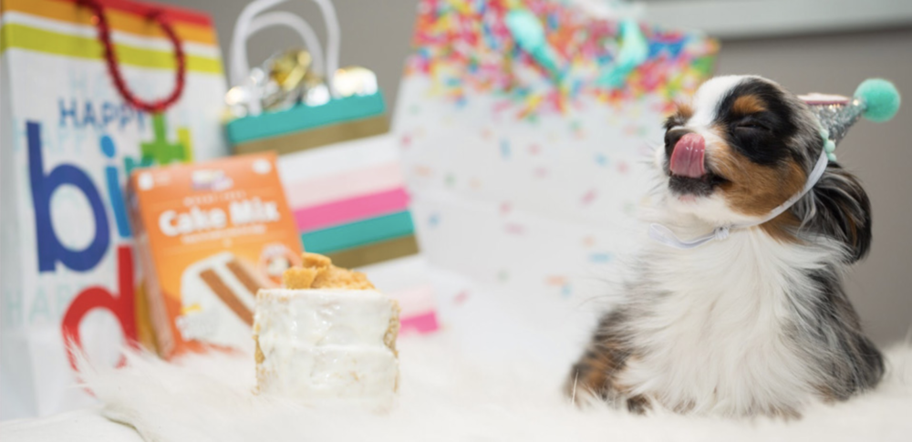 COVID-19 has had an unprecedented effect and manufacturers have had to adapt to a change in operations, and shifting consumer behaviors. Puppy Cake shared their experience as a small manufacturer.